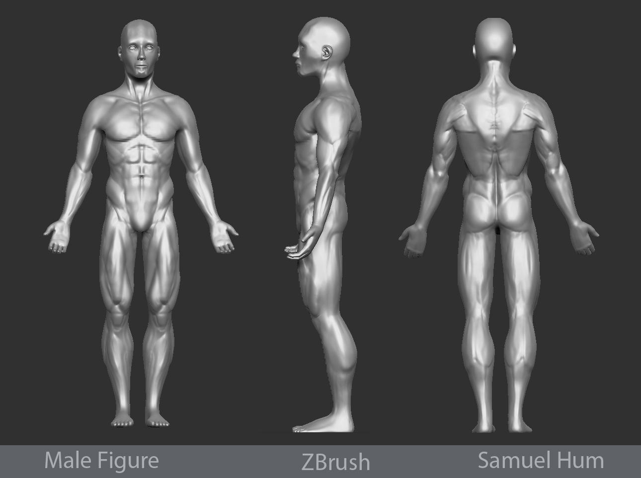 male figure zbrush sculpt pencilgym com